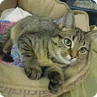 Adopt A Pet :: Piglet - Medina, OH