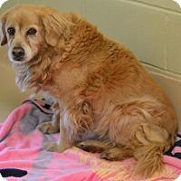 Adopt A Pet :: CC - New Canaan, CT