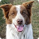 Adopt A Pet :: CASH