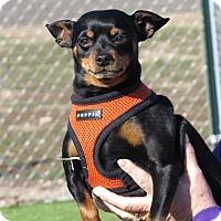 Adopt A Pet :: Esl - Meridian, ID