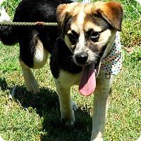 Adopt A Pet :: Colleen - Lebanon, CT