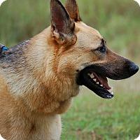 Adopt A Pet :: Taz AD 01-09-16 - Preston, CT