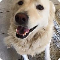 Adopt A Pet :: URGENT!  Roxy - Los Angeles, CA