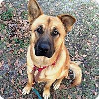 Adopt A Pet :: Kennedy - Daleville, AL