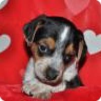 Adopt A Pet :: Alvin - Crocker, MO