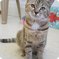Adopt A Pet :: Cupcake - Mocksville, NC
