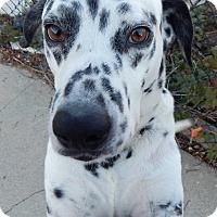 Adopt A Pet :: Amigo - Gardena, CA