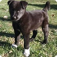 Adopt A Pet :: Ashland - New Oxford, PA