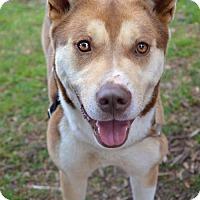 Adopt A Pet :: Sansa - Roswell, GA
