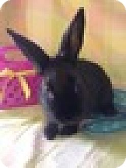 Other/Unknown Mix for adoption in Paramount, California - Mouse