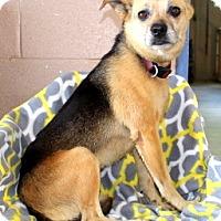Adopt A Pet :: Laney - Willingboro, NJ