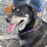 Adopt A Pet :: Katy - Greensboro, NC