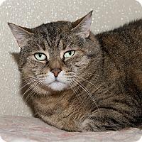 Adopt A Pet :: Antoinette - Wilmington, DE