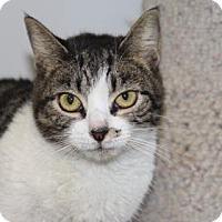 Adopt A Pet :: Mia - Greensboro, NC