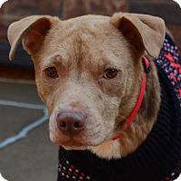 Adopt A Pet :: Ruby - Tulsa, OK