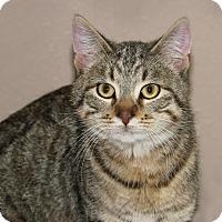 Adopt A Pet :: Hannah - Idaho Falls, ID