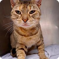 Adopt A Pet :: Nutmeg - Philadelphia, PA