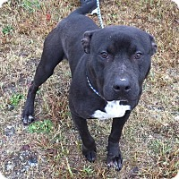 Adopt A Pet :: Roscoe - Auburn, MA