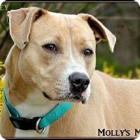 Adopt A Pet :: Marley - Dixon, KY