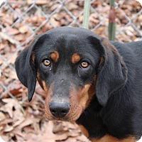 Adopt A Pet :: Sandy - Harrisonburg, VA