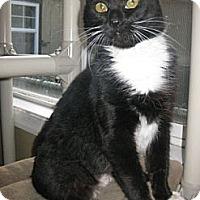 Adopt A Pet :: Zeta - Bloomsburg, PA