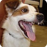 Adopt A Pet :: Mason - Justin, TX