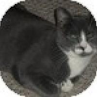 Adopt A Pet :: Vincent - Vancouver, BC