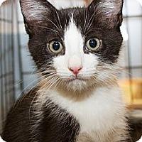 Adopt A Pet :: Alex - Irvine, CA