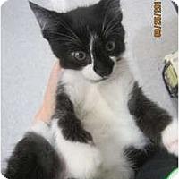 Adopt A Pet :: Teddie - Sterling Hgts, MI