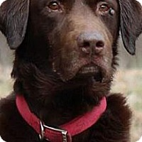 Adopt A Pet :: Storm - Plainfield, CT