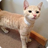 Adopt A Pet :: Paul - East Hanover, NJ