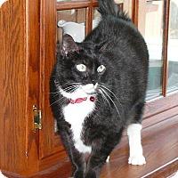 Adopt A Pet :: XENA - Springfield, PA