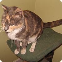 Adopt A Pet :: Mila - Colmar, PA