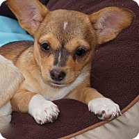 Adopt A Pet :: Hildie - La Habra Heights, CA