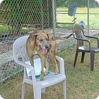Adopt A Pet :: Elsa - Lufkin, TX