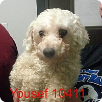 Adopt A Pet :: Yusef - baltimore, MD