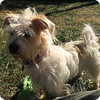 Adopt A Pet :: Gustav - Mt. Prospect, IL