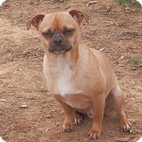 Adopt A Pet :: Ricki - Clarksville, TN