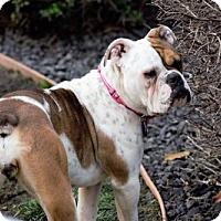 Adopt A Pet :: Wilhelmina - Sacramento, CA