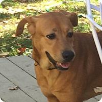 Adopt A Pet :: Annie 2015 - Midlothian, VA