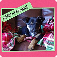 Adopt A Pet :: Abby - Hagerstown, MD