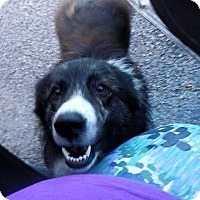 Adopt A Pet :: Manning - Lewisburg, TN