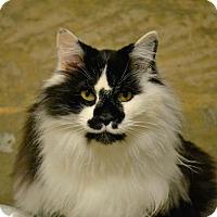Adopt A Pet :: Molisa - Saginaw, MI