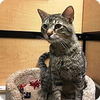 Adopt A Pet :: River - Riverside, CA