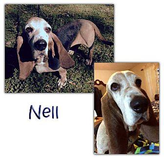 Basset Hound Dog for adoption in Marietta, Georgia - Nell
