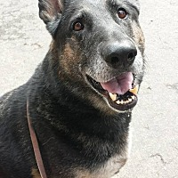 Adopt A Pet :: Gunner-ADOPTION FEE SPONSORED! - Lincoln, CA