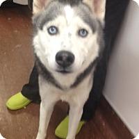 Adopt A Pet :: Creed - Elyria, OH