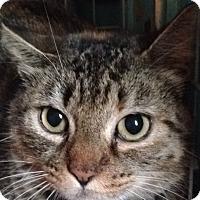 Adopt A Pet :: Flake - Salisbury, MA