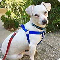Adopt A Pet :: Albert - Goleta, CA