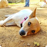 Adopt A Pet :: Gigi - Kendall, NY